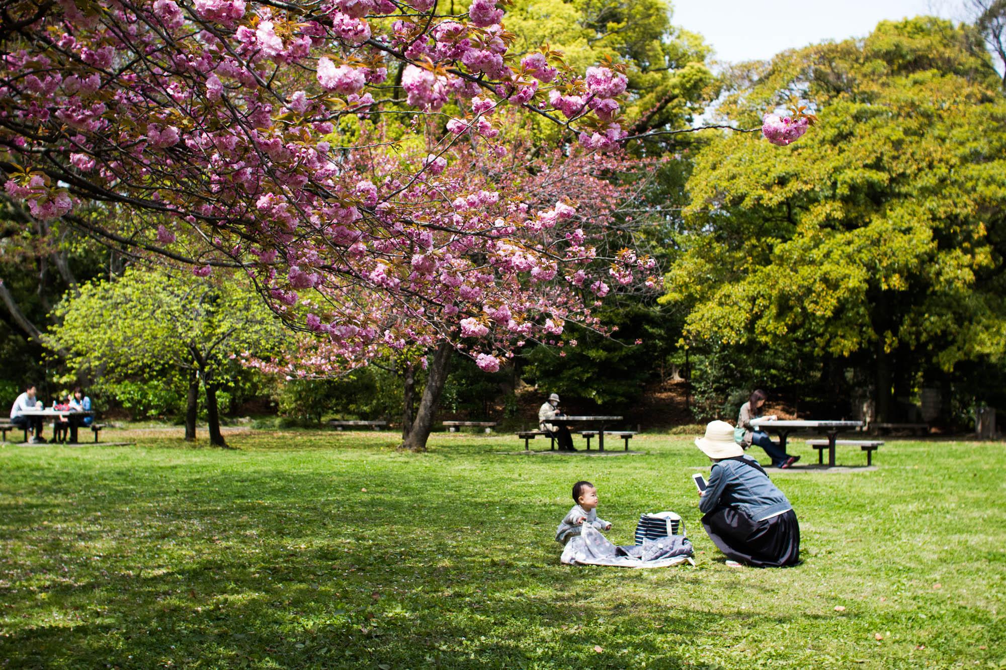 清澄庭園 自由公園